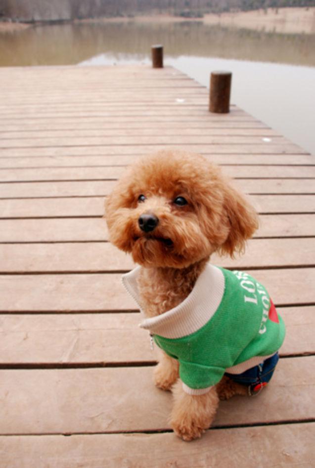 """周周/大年初七 天气阴 没有好天气 但我们有好心情一行四""""人""""琵琶湖..."""